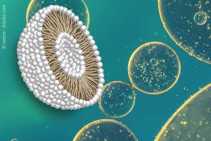 liposomales-MSM-300x200