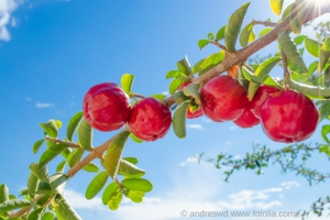 vitamin_c_copyright_andreswd_www-fotolia-com57a0527d31721