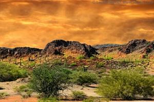 Wild_Yam_copyright_Laurin-Rinder_www-fotolia-com