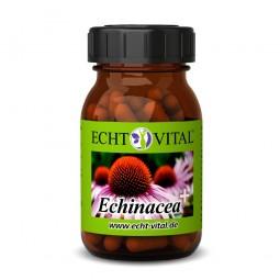 ECHT VITAL Echinacea+ - 1 Glas mit 60 Kapseln