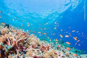Labelfoto-Sango-Koralle-klein-300x200